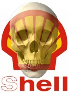 460_0___30_0_0_0_0_0_shell_skull_colour