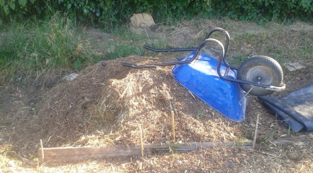 woodchip compost